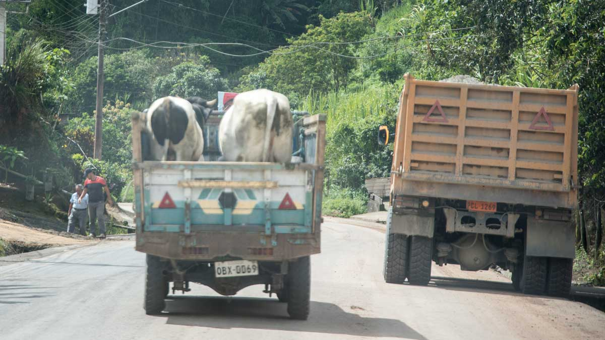 Typical traffic in rural Ecuador | ©Angela Drake