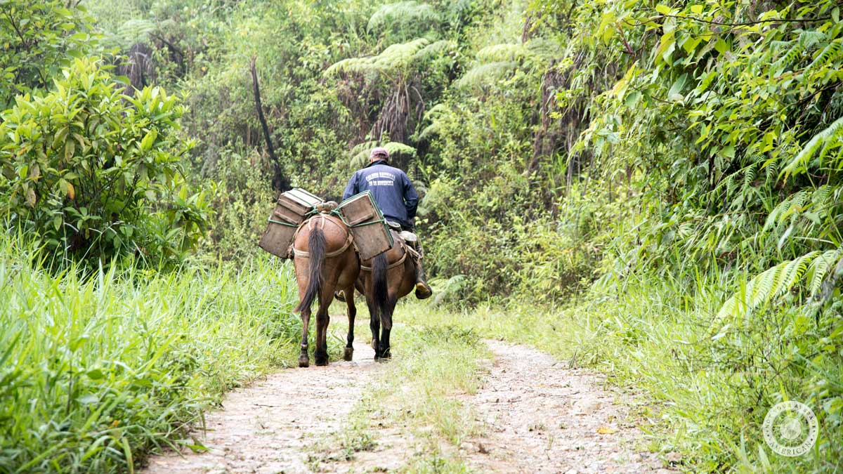 Cheese delivery on horseback, Guizhaguiña, Ecuador | ©Angela Drake