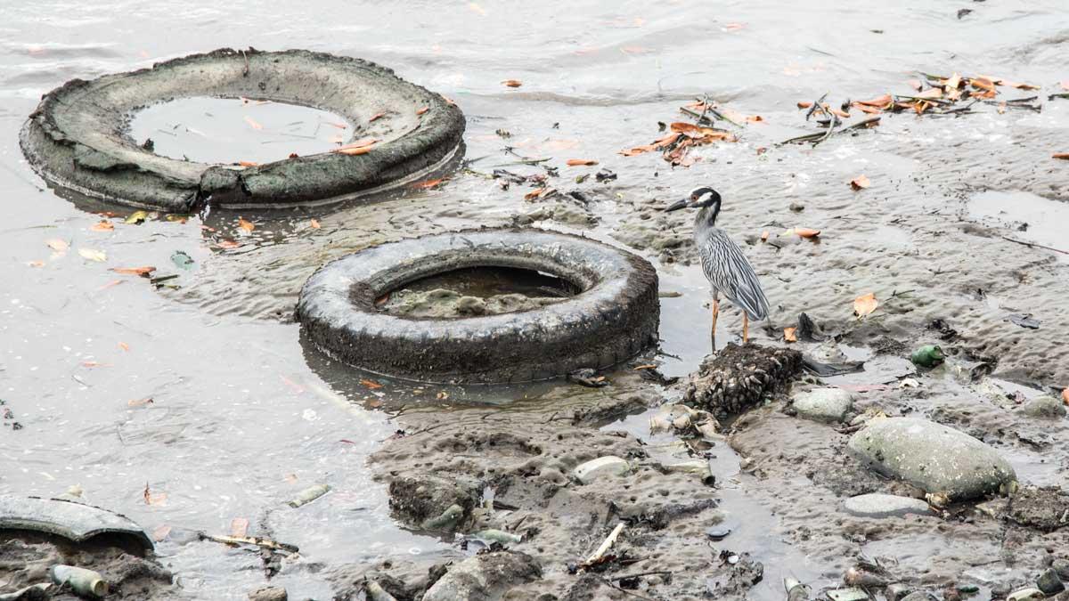 Garbage on the Seashore at Puerto Bolivar, Ecuador   ©Angela Drake