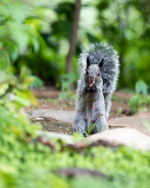 Guayaquil Squirrel, Jorupe Reserve, Ecuador | ©Angela Drake