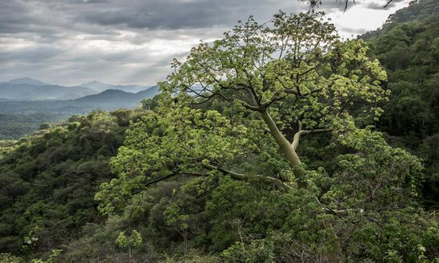 Experience the Dry Forests of the Jorupe Reserve