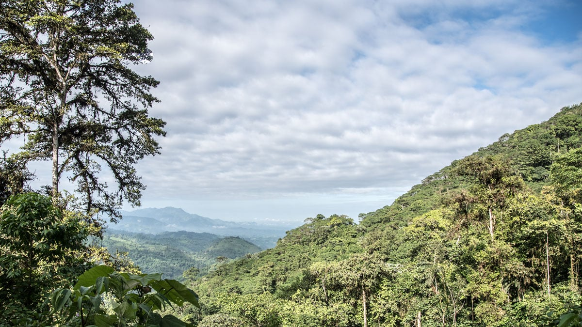 View from the Buenaventura Reserve, Piñas, Ecuador | ©Angela Drake