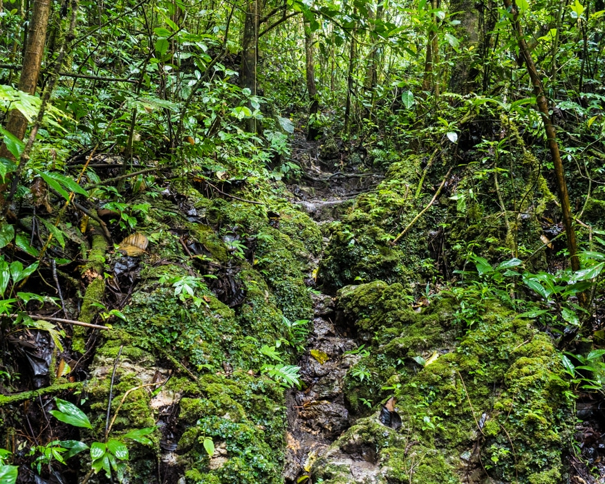 A very challenging, rocky trail thru the forest, Labyrinth of a Thousand Illusions, Ecuador| ©Ernest Scott Drake