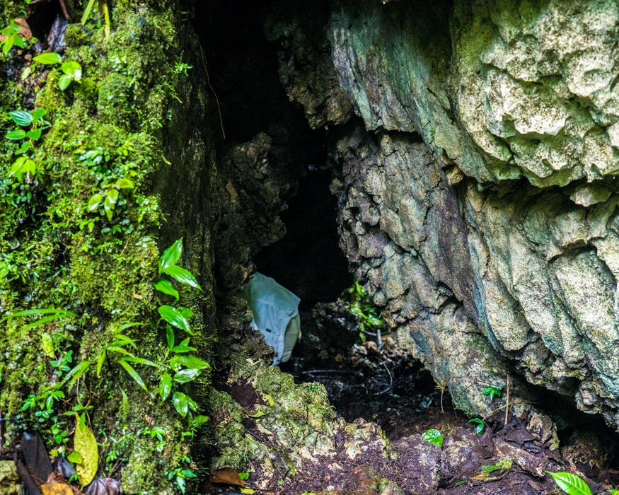 Gone into the Crab Spider cave. |© Ernest Scott Drake