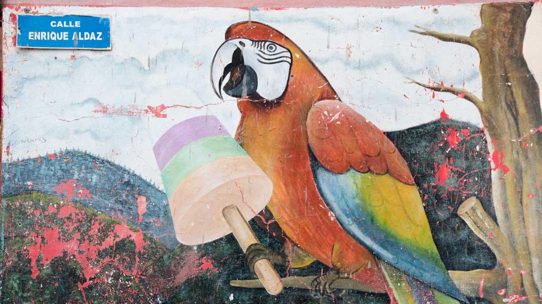 Parrot Mural Leading to the Isla del Pailon Trail, Rio Verde, Ecuador | ©Angela Drake